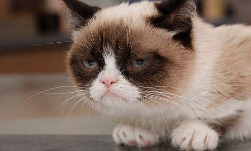 Cea mai trista pisica din lume a devenit imahinea produselorFriskies, cel mai important producator de mancare pentru pisici, cu sediul in St. Louis, SUA. Oficialii companiei spera ca Grumpy Cat sa