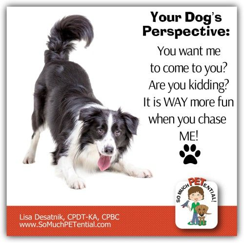 Dog Training Tip On Teaching Reliable Recall To Your Dog Dog