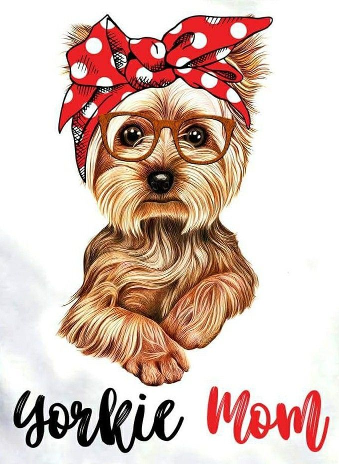 17 Pictures Of Yorkshire Terriers To Brighten Your Day Petpress Dog Paintings Yorkshire Terrier Puppies Dog Drawing