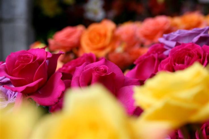 flowr-colors