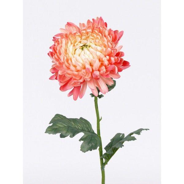Kugel-Chrysantheme, rosa, 3 Blätter, 75cm, Ø 15cm