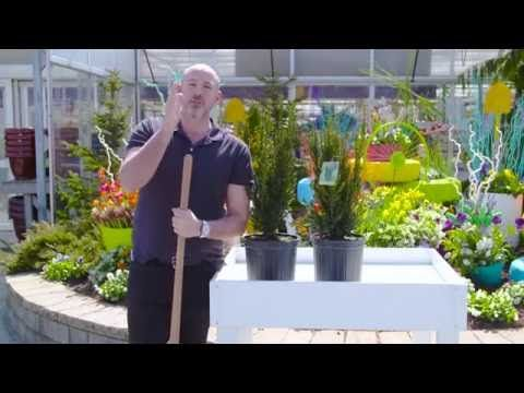 It's not too late to plant tomatoes for the Great Tomato Race but be sure to give them space!  Carson Arthur shows us a trick on how to make sure your plants have enough space.  Give tomatoes about a foot from the center of the plant to grow big enough for a chance to WIN a $5,000 TERRA Gift Card! #GreatTomatoRace