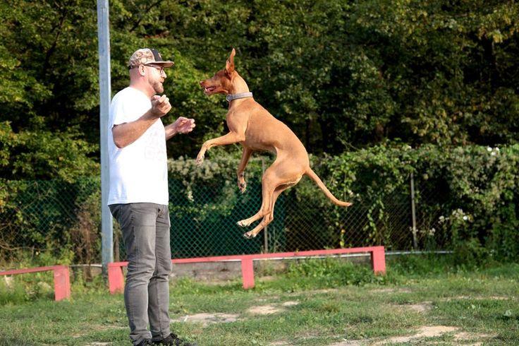 Tükör módszer: egy különleges iskola kutyáknak és gazdiknak - NLCafé