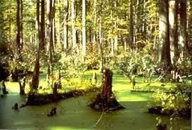 swamp - Google Search