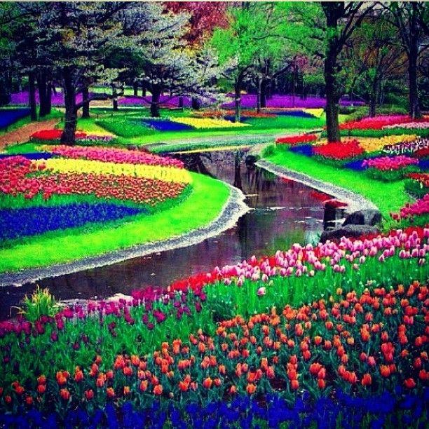 Amsterdam, The Netherlands to experience the tulips at Keukenhof Garden.