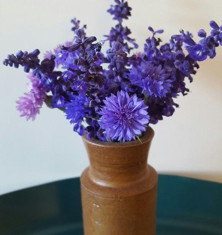 Weekly posy - salvia and cornflower