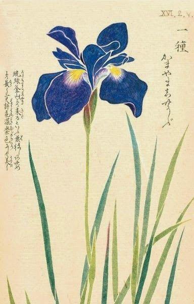 Blog dedicado al ikebana, arte floral japonés.  Camino de meditación , Ka-do, camino de las flores