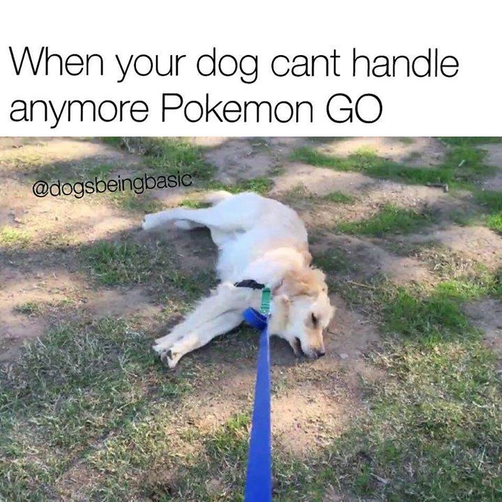 When your dog can't handle anymore Pokémon go  Www.whenmeme.blogspot.com for more memes