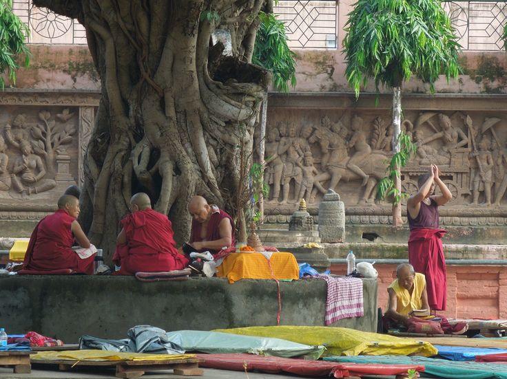 Bodhiboom