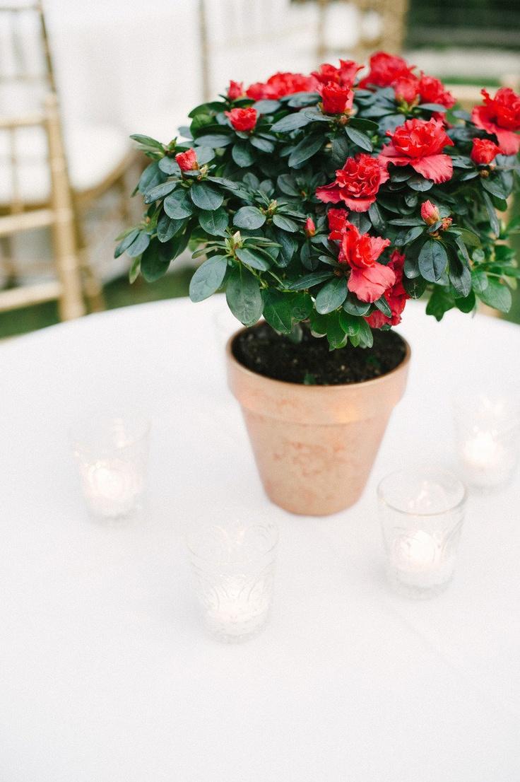 The 14 best Romantic Wedding at Hotel Baker images on Pinterest ...