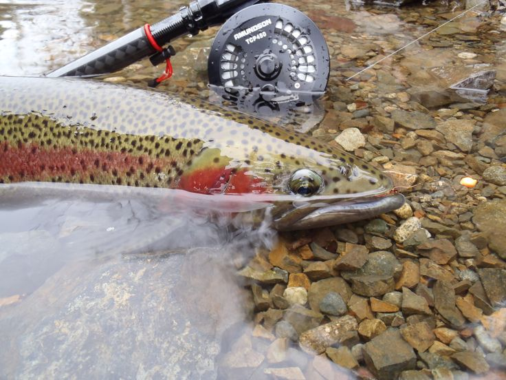 17 best images about rods reels and lures on pinterest for Center pin fishing