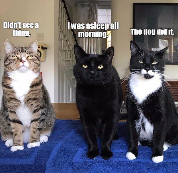 LOL cats! (@LOL_cats) | Twitter