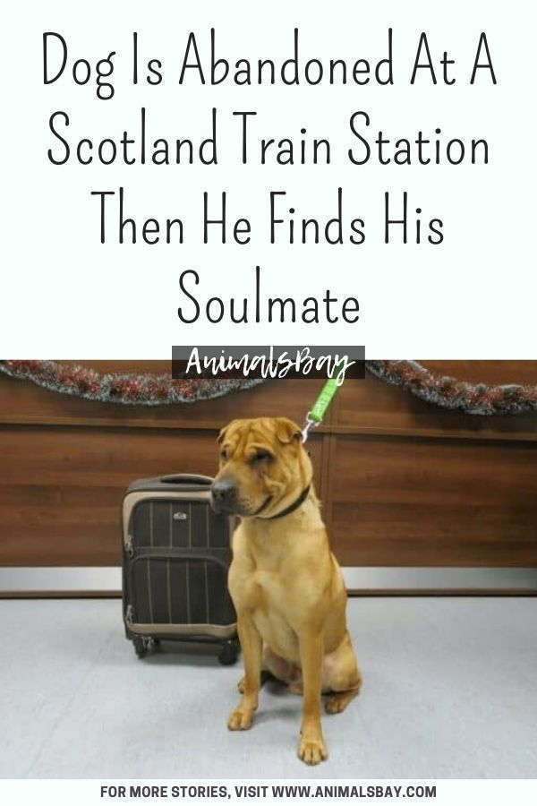 Dog Is Abandoned At A Scotland Train Station Then He Finds His Soulmate In 2020 Dogs Animal Stories Train Station