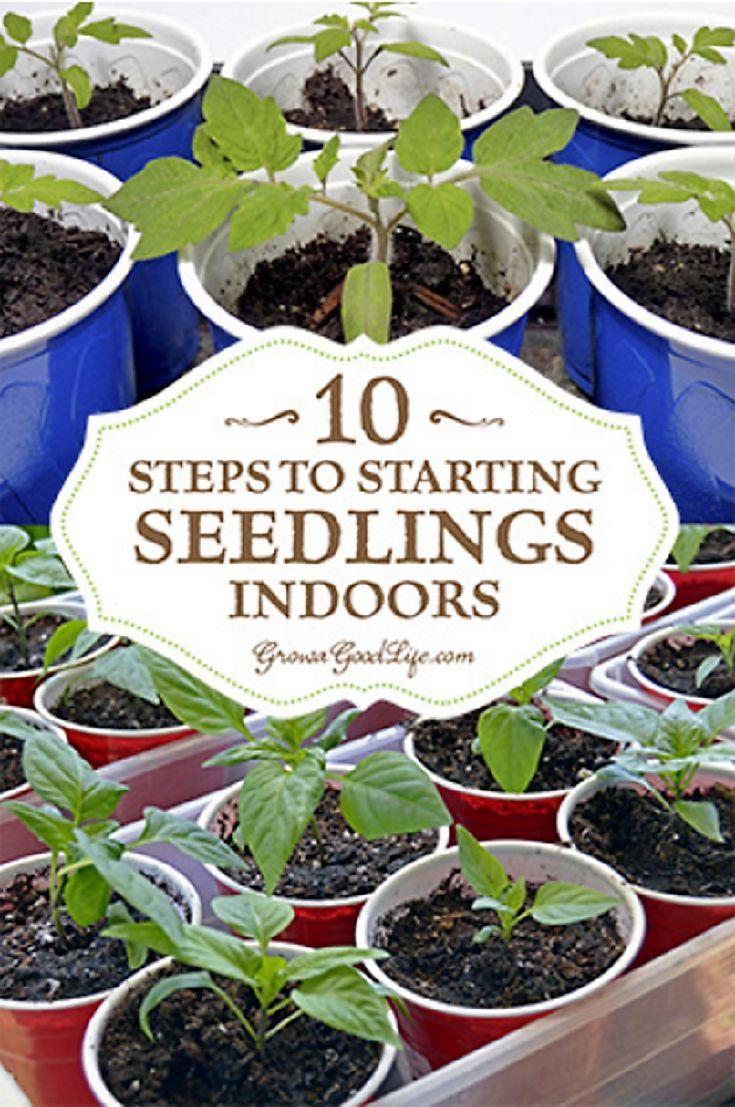 6027 Best Garden Images On Pinterest Gardening 640 x 480