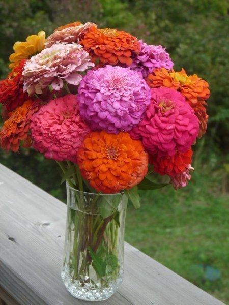 pretty zinnia bouquet