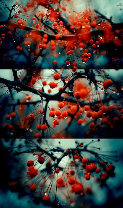 tree berries in raindrops