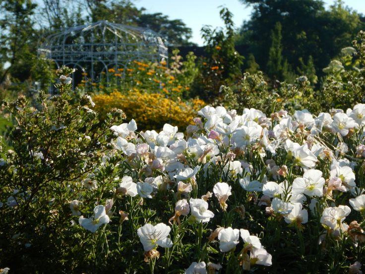Zengő virágok völgye   Edenpont
