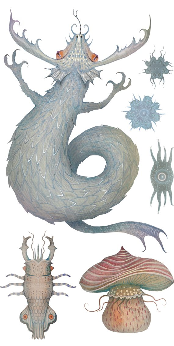 Marine Curiosities by illustrator Vladimir Stankovic who often combines molluscs and insects.