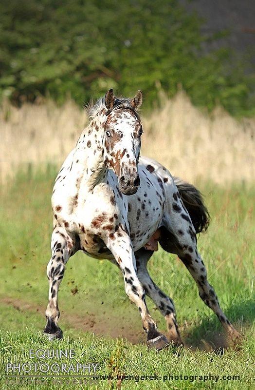 Equine Photography - Karolina Wengerek Horses