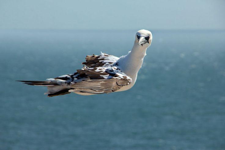 #Helgoland #Vögel #Fotomotiv
