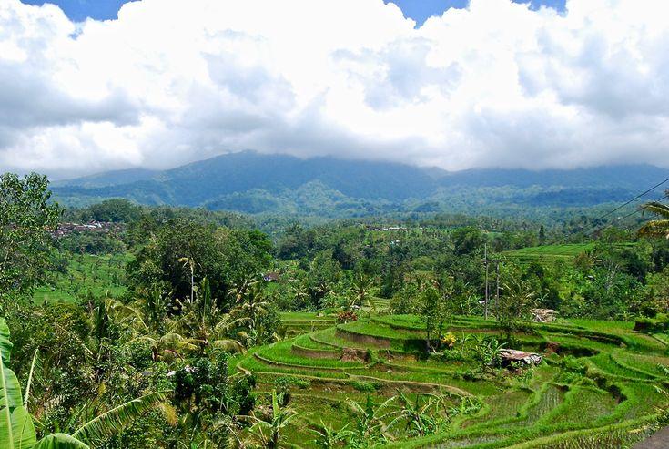 Rice Terrace Unesco- Le guide ultime pour votre séjour de surf à Canggu, Bali - Nomad Junkies