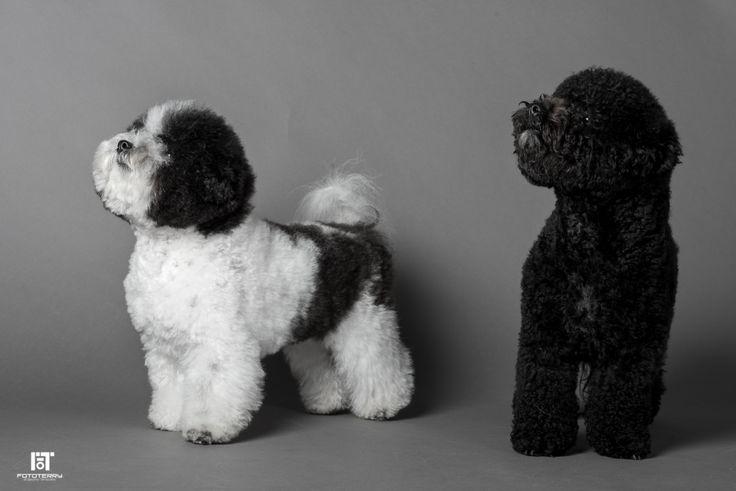 Servizi fotografici professionali per cani! #pesaro #cani #dogs #photo