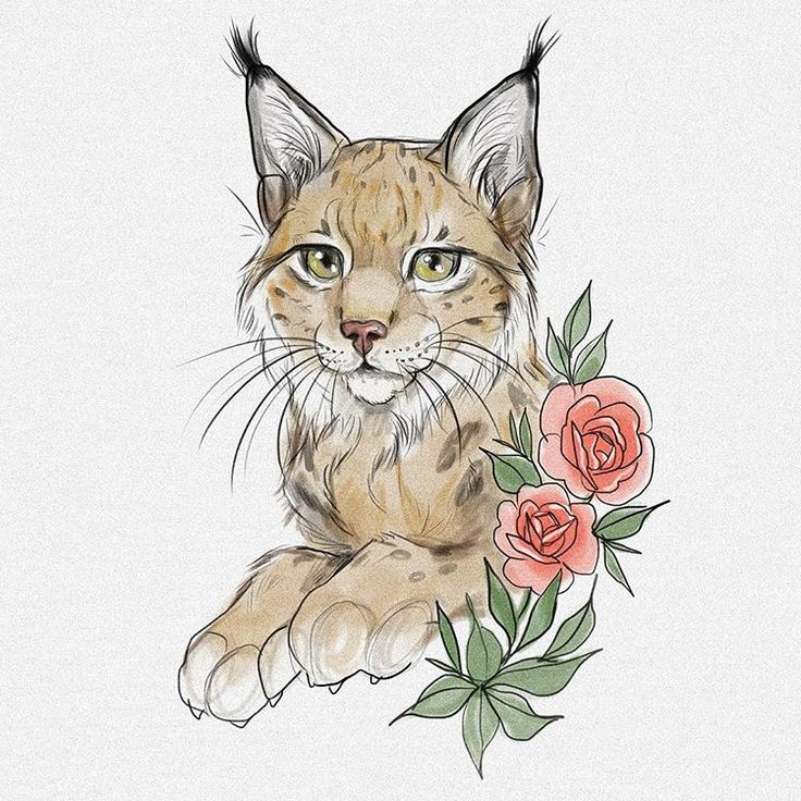 59 best Lynx siluets, graphic, tatoo ... images on Pinterest   Lynx, Tattoo ideas and Drawings