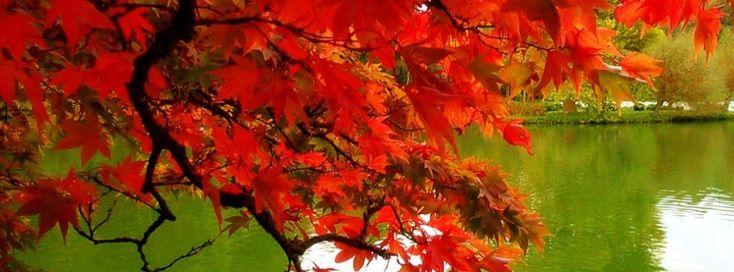 Autumn Timeline Cover - Facebook timeline covers maker