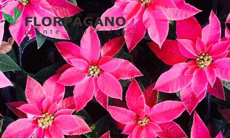 La foto del giorno by Florpagano www.florpagano.com