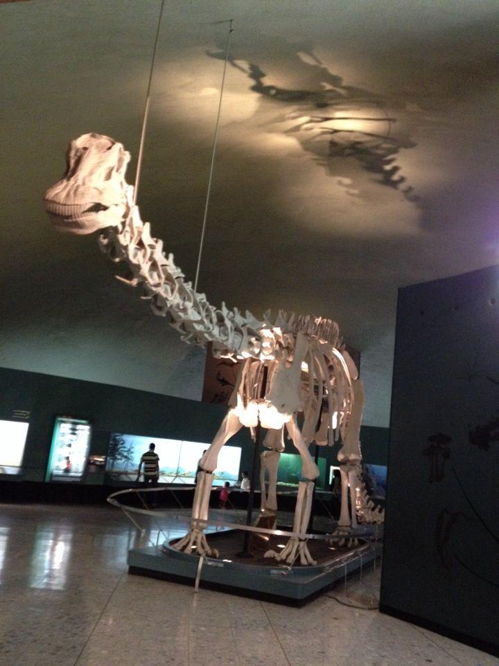Museo de Historia Natural y Cultura Ambiental en Miguel Hidalgo, Distrito Federal