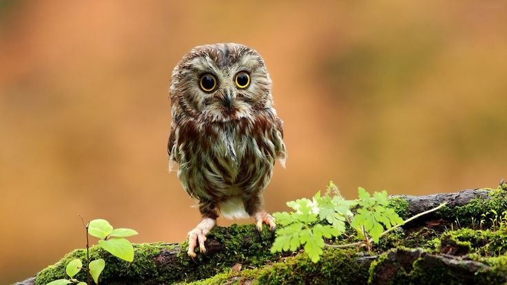 cute owl wallpaper hd