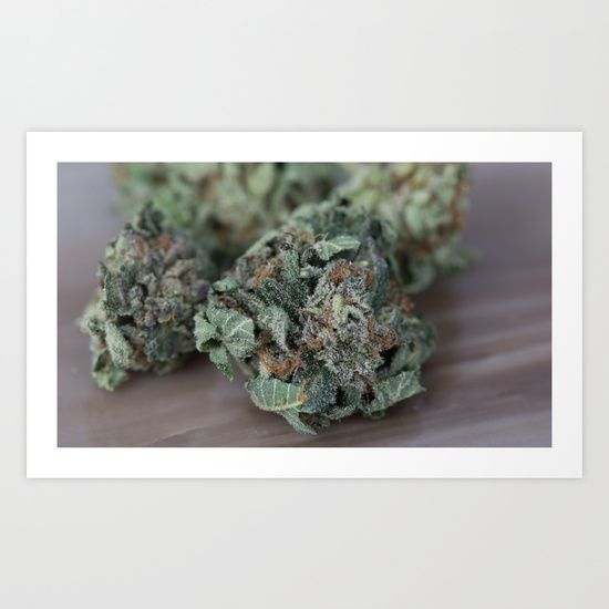 Master Kush Medical Marijuana by Medical Marijuana