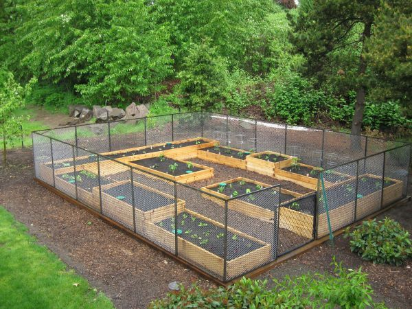 68 best raised bed gardens images on pinterest for Garden bed fence ideas