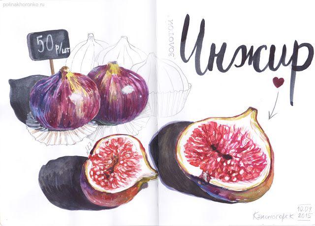#sketchbook by Polina Khoronko: Скетчбук 2015 #watercolor #foodillustration #fig