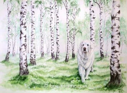 In memories - Sani, The Great Pyrenees