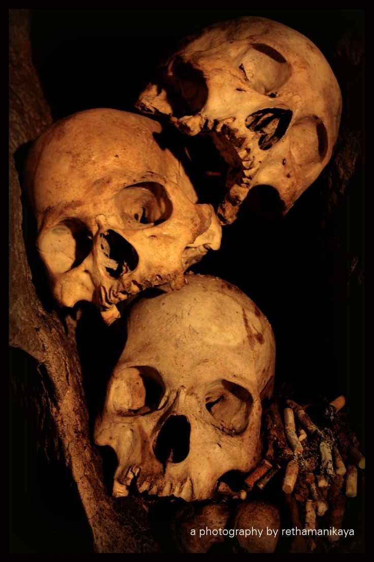real human skull by manikayas.deviantart.com
