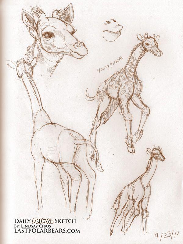 Giraffe Calf                                                                                                                                                                                 More