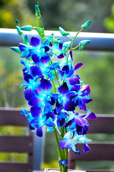 Blue orchid, with hints of purple and greens
