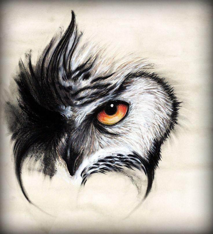 best 25 owl eye tattoo ideas on pinterest owl drawings