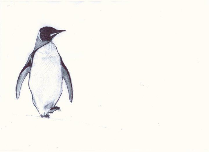 penguin sketch in pencil
