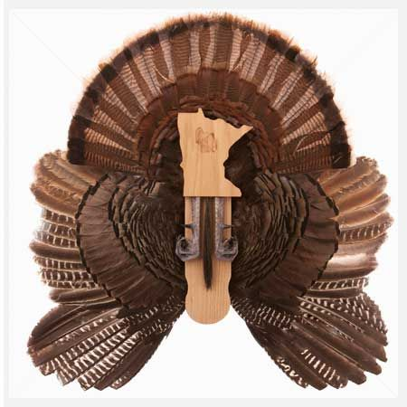 Best 25 Turkey Mounts Ideas On Pinterest Turkey Hunting