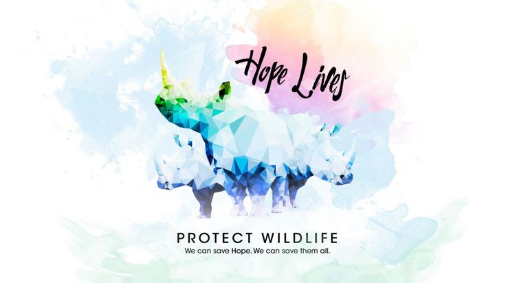 Poachers stole her horn and left her for dead, but Hope survived. 10 Days for Hope is a fundraiser to help raise money for Hope's recovery and awareness about the rhino poaching epidemic. Learn how you can help after the jump. http://wearehalfhill.com/2015/07/02/10-days-for-hope-a-fundraiser?utm_content=buffer306d5&utm_medium=social&utm_source=pinterest.com&utm_campaign=buffer #animalrights #fundraiser #poaching #rhino #wildlife