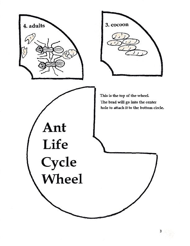 Ant Activities Worksheet | Little Black Ant song Activities - page 3