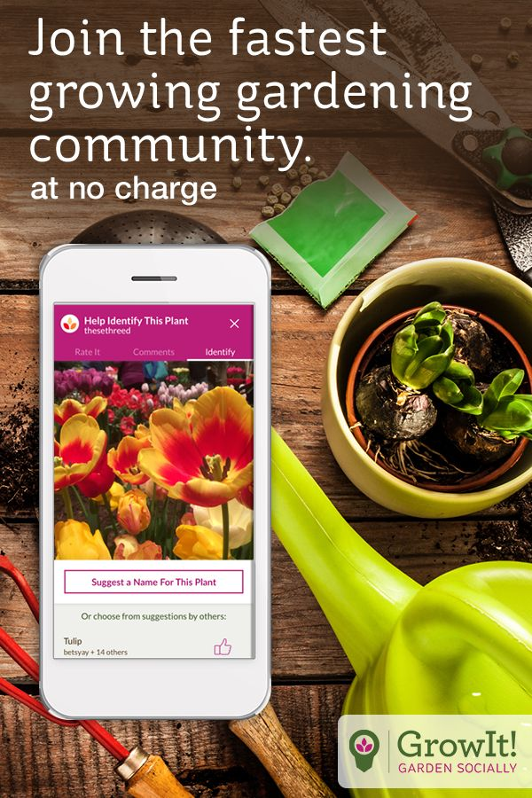 What's that mystery plant? Download GrowIt! and find out. Check out the app that everyone is talking about. Whether you're looking to put some plants in your apartment or add some more perennials to your garden, GrowIt! has something for you. Learn how to grow your favorites, or have mystery plants identified.