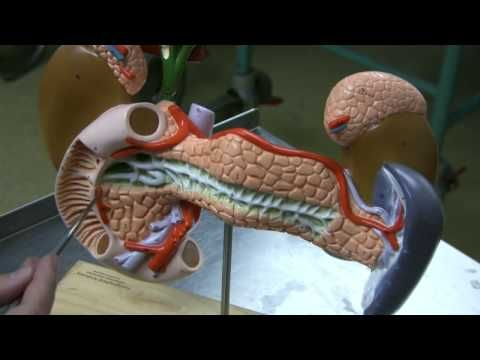 Dr. Fabian Identifying Parts of the Skull Part 1 of 2 - YouTube