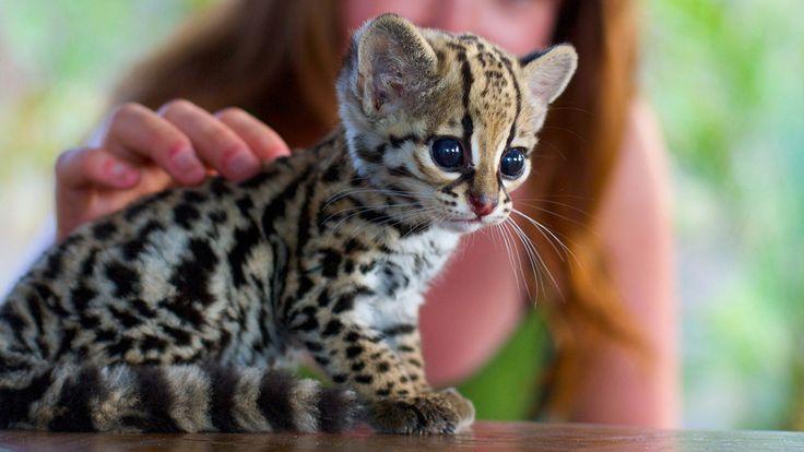awe, baby, love the eyes!!! Love the smallness!!!!