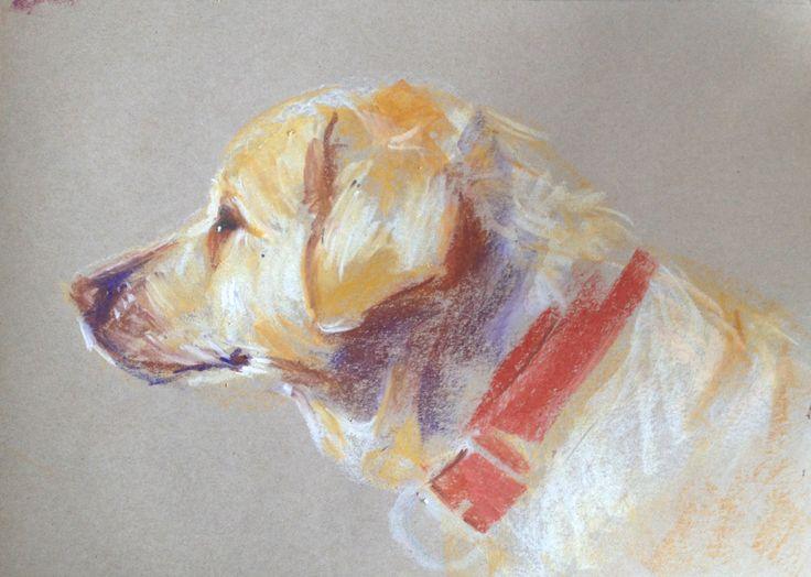 'Harry', Oil pastel on paper - A3 size. Yellow labrador. Dog portrait