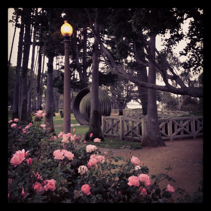 Palisades Park Santa Monica Rose Garden. Pure Tranquility. | // Life In A  Nutshell // | Pinterest | Gardens, Parks And Santa Monica