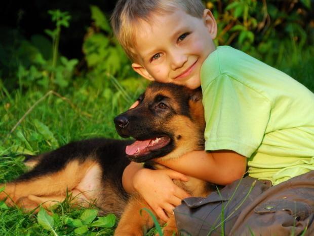 Собаки-воспитатели: какую породу лучше заводить семьям с маленькими детьми  https://joinfo.ua/lady/mother/1216149_Sobaki-vospitateli-kakuyu-porodu-zavodit-semyam.html