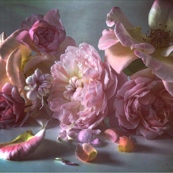 Garden Roses Flower Petal: 20 Best ARTIST - Nick Knight Images On Pinterest